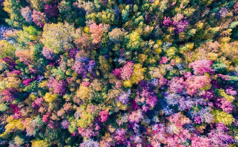 Les couleurs vues d'en haut